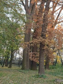 FOTKA - stromy v parku,,,,,,,,,,