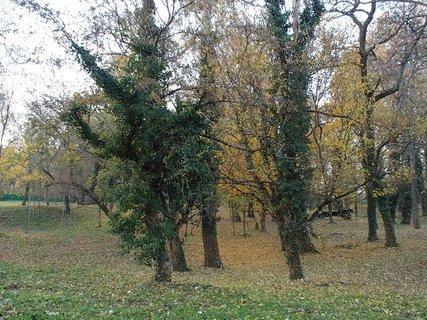 FOTKA - stromy v parku,,,,,,,,,,,