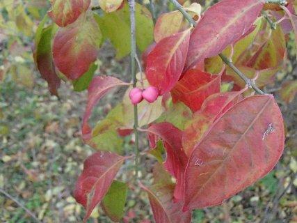 FOTKA - 2012 farby jesene189