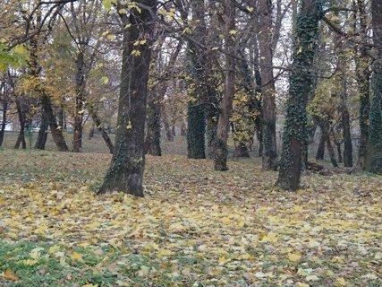 FOTKA - stromy v parku,,,,,,,,,,,,
