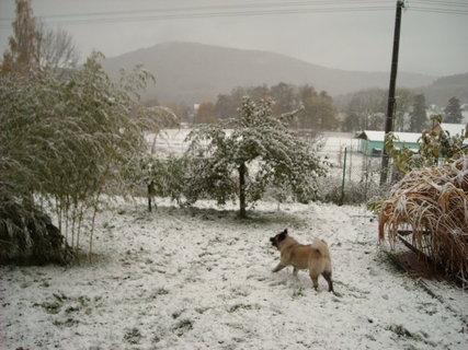 FOTKA - zima11