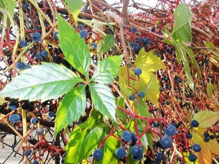 FOTKA - Podzim barví 30