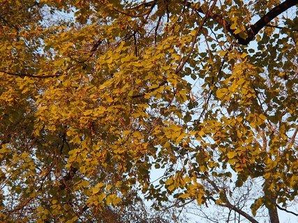 FOTKA - 2012 farby jesene192