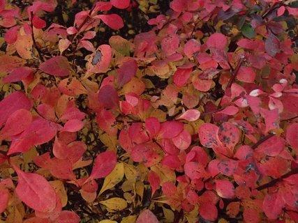 FOTKA - 2012 farby jesene193