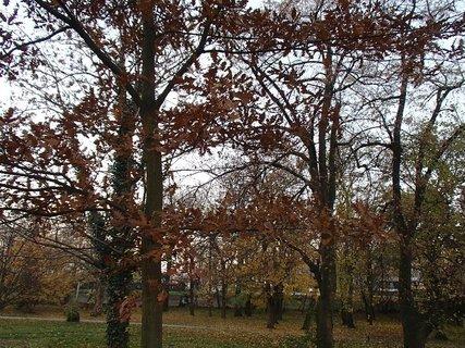 FOTKA - stromy v parku2