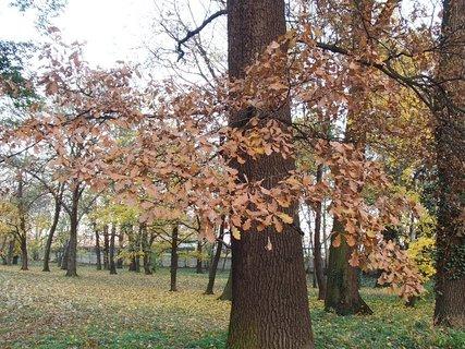 FOTKA - stromy v parku3