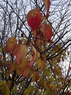 FOTKA - 2012 farby jesene196