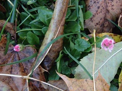 FOTKA - sedmokrásky v lese