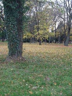 FOTKA - stromy v parku4
