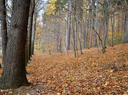 FOTKA - Podzimní/ procházka