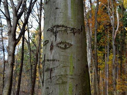FOTKA - Strom s obličejem