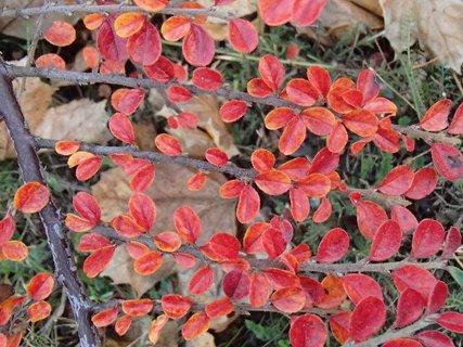 FOTKA - 2012 farby jesene197