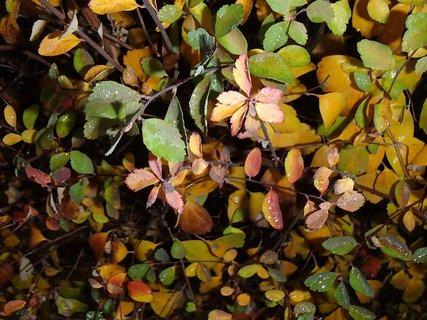 FOTKA - 2012 farby jesene198
