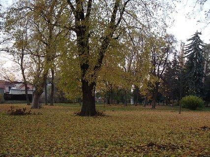 FOTKA - stromy v parku5