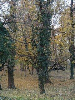 FOTKA - stromy v parku6