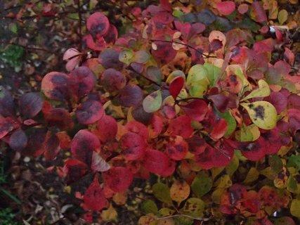 FOTKA - 2012 farby jesene200