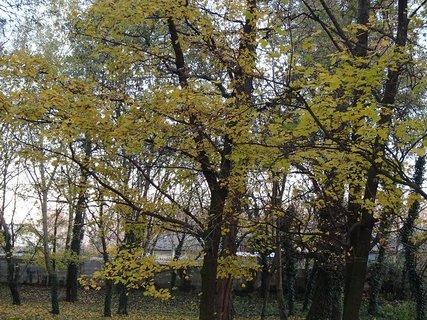 FOTKA - stromy v parku7