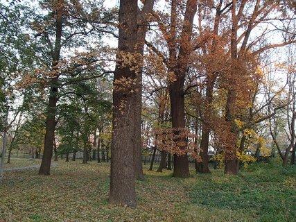 FOTKA - stromy v parku8