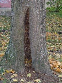 FOTKA - diera v pni stromu
