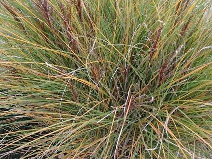 FOTKA - 2012 farby jesene201