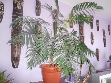 FOTKA - Domácí palmička