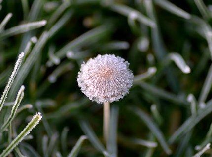 FOTKA - Mrazivé ráno v trávě