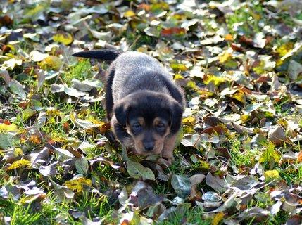 FOTKA - Kdo se v tom listí má brouzdat, mám ještě krátký nožičky