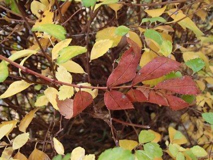 FOTKA - 2012 farby jesene205