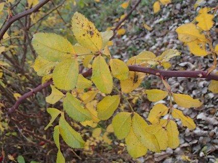 FOTKA - 2012 farby jesene206