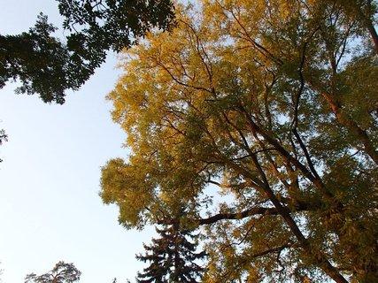 FOTKA - 2012 farby jesene208
