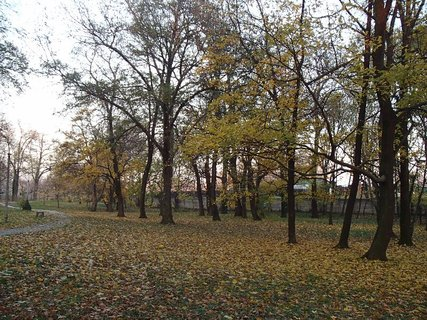 FOTKA - stromy v parku9