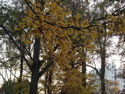 FOTKA - stromy v parku10