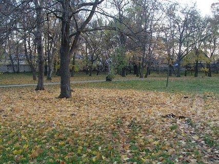 FOTKA - rôznofarebné lístie v parku