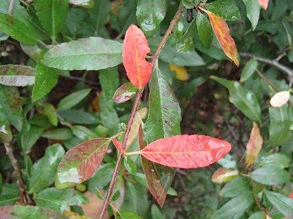 FOTKA - 2012 farby jesene210