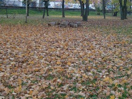 FOTKA - spadnuté lístie v parku..