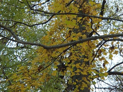 FOTKA - stromy v parku11