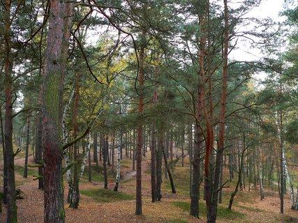 FOTKA - V podzimním lese