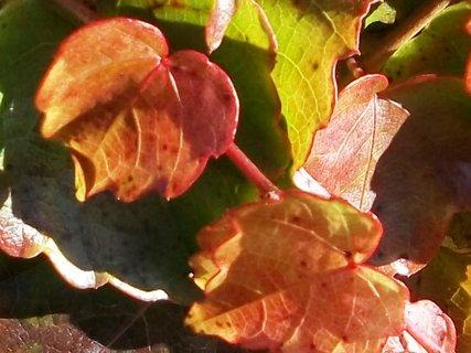 FOTKA - Podzim barví 32