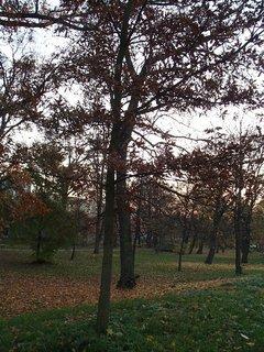 FOTKA - stromy v parku12