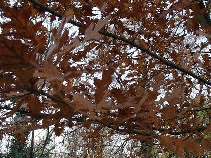 FOTKA - jeseň v hnedom šate