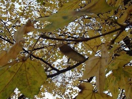 FOTKA - lístie stromov
