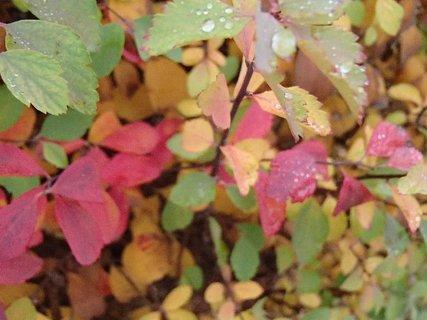 FOTKA - 2012 farby jesene219