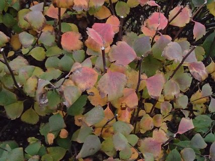 FOTKA - 2012 farby jesene221