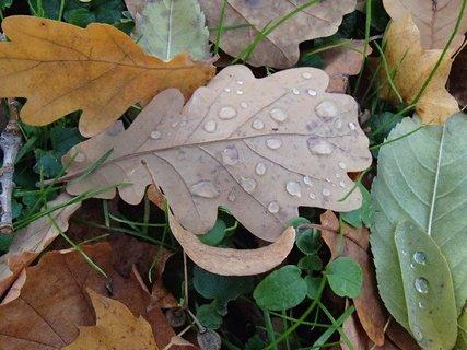 FOTKA - list s kvapkami dažďa