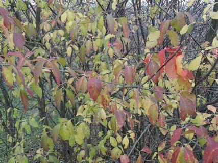 FOTKA - 2012 farby jesene222