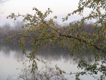 FOTKA - strom nad riekou