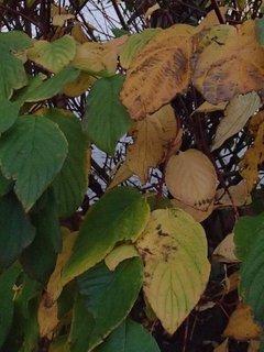 FOTKA - zelené a suché listy