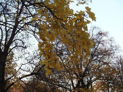 FOTKA - stromy v parku13