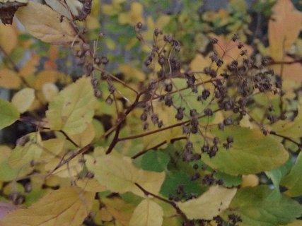 FOTKA - 2012 farby jesene230