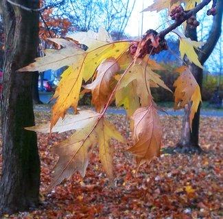 FOTKA - Podzim barví 37